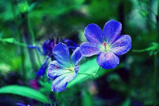 Gary Wonning - Purple Passion