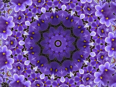 Purple Violets by Yvette Pichette