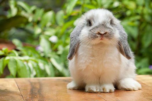 Rabbit by Acha Yhamruksa