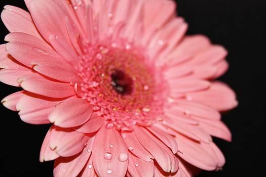 Rain Drops by Cathie Tyler