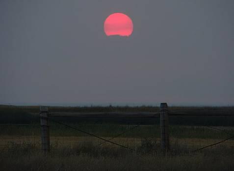 Red Dawn by Sandi Owens