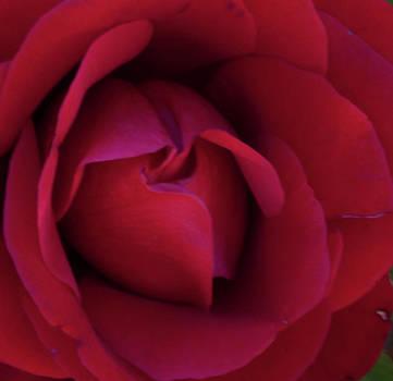 Gilbert Artiaga - A Red Rose