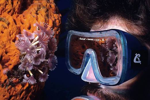 Don Kreuter - REEF REFLECTIONS