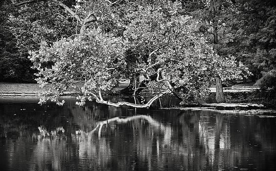 Reflection by Jen Morrison
