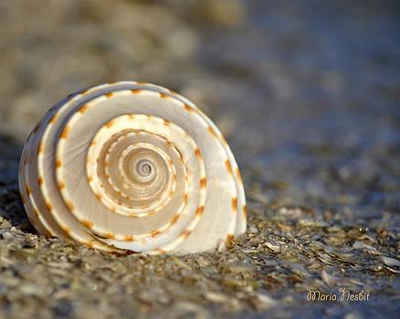 Resonance of the Sea by Maria Nesbit