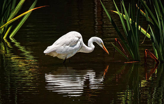 Ripples on the Pond  by Donna Pagakis