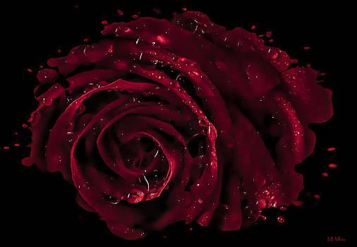 Jeff Adkins - Rose Drop