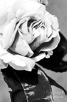 Pravine Chester - Rose in Monochrome