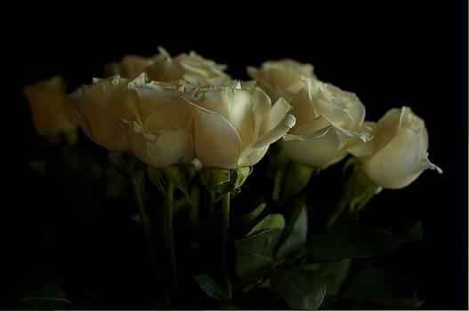 Mario Celzner - Roses