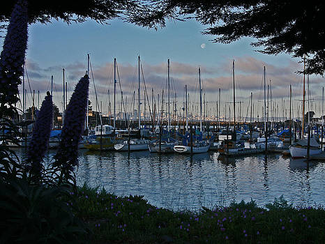 San Fransisco Harbor by Rick Mutaw