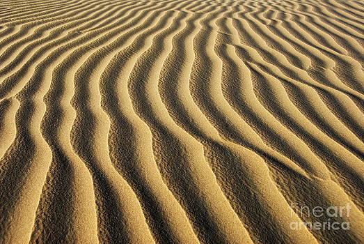 Sand dunes by Tomaz Kunst
