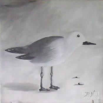Seagull by Debra Piro