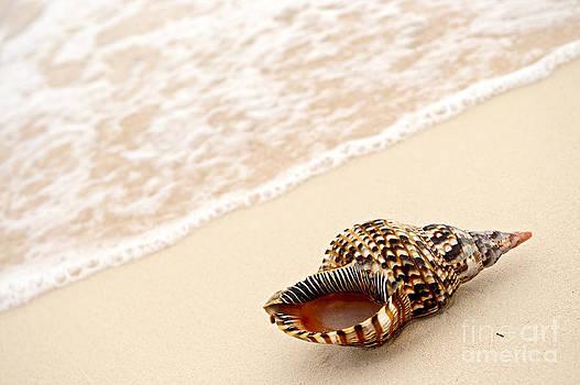 Elena Elisseeva - Seashell and ocean wave