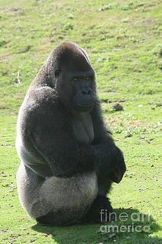 Sitting gorilla by Carol Wright