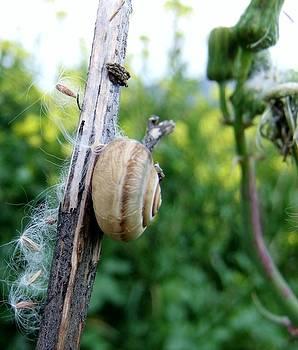 Snail by Steve Mangan