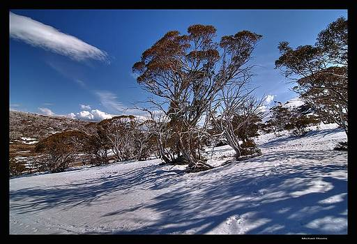 Snow Gums in the Snow by Michael Thoms