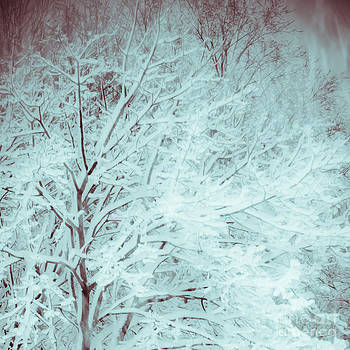 Christina Klausen - Snow on Trees