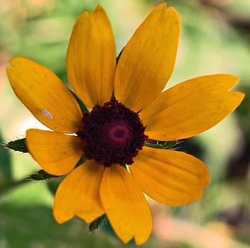 Michelle Cruz - Soft Yellow Petals