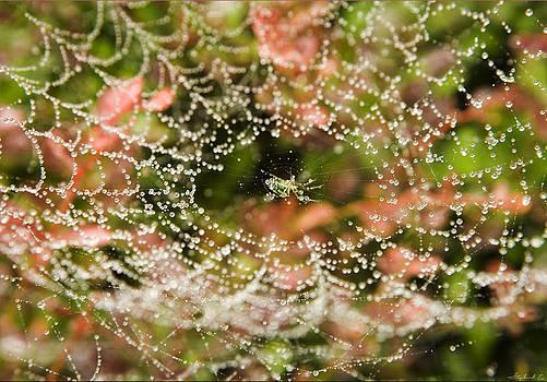 Spider Under Dew by Stephen EIS