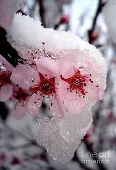 Spring Blossom Icicle by Kerri Mortenson