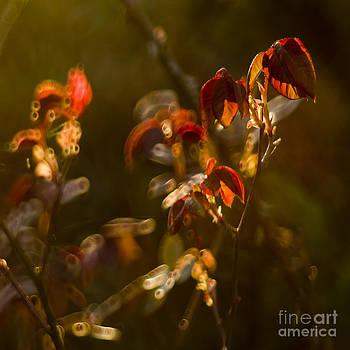 Angel  Tarantella - spring in my garden