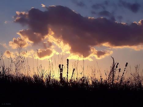 Summer Sunset by Lauren Radke
