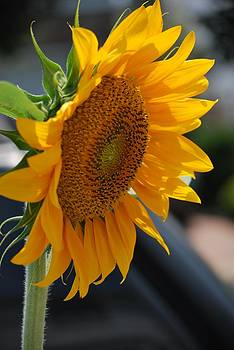 Michelle Cruz - Sunflower Power