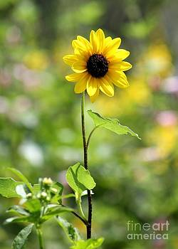 Sunny Flower by Theresa Willingham