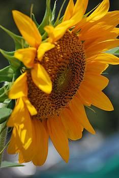 Michelle Cruz - Sunny Sunflower