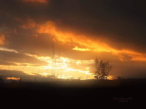 Darlene Bell - Sunset Fog