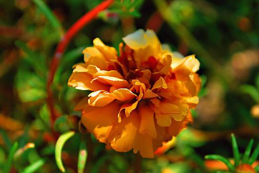 Michelle Cruz - Sunshine in the Garden