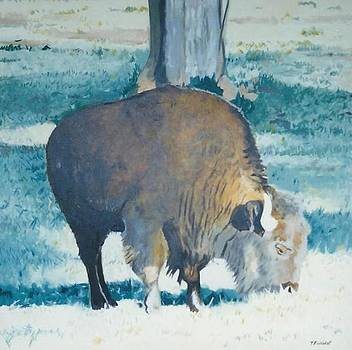 The Bison by Terry Forrest