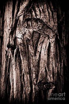The Looking Tree by LillyAnn Venturino
