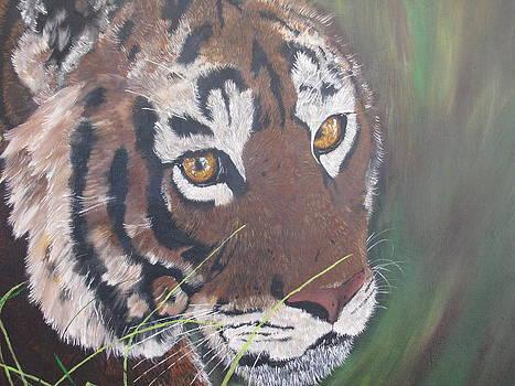 Tiger Stare by Jason Turner