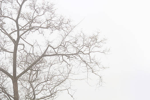 Tree against a white sky in the early morning hours by Gal Ashkenazi