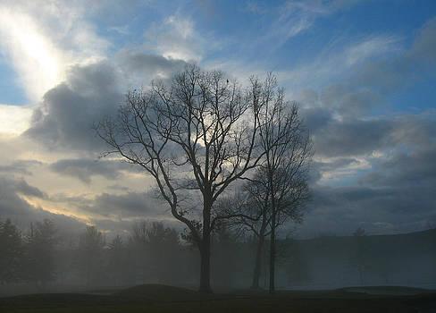 Trees in the mist by Leontine Vandermeer