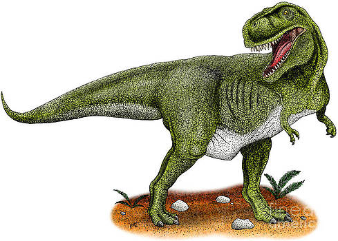 Roger Hall and Photo Researchers - Tyrannosaurus Rex