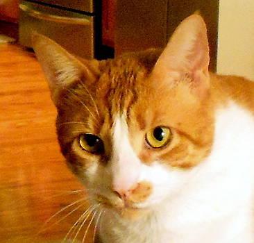 Vincent van Cat by Ted Hebbler