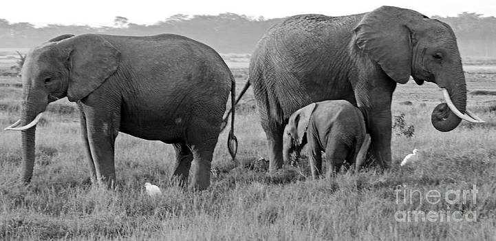 Pravine Chester - Wild Elephants