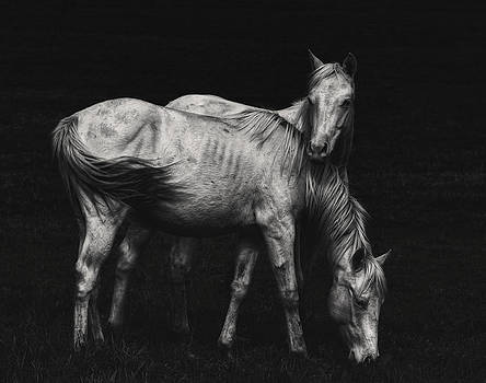 Wild Horses by Heather  Rivet