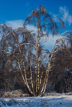 Winter tree by Alexandr S