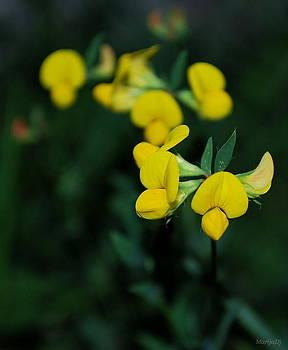 Yellow by Marija Djedovic