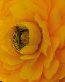 Michelle Cruz - Yellow Petals