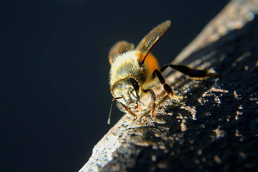Yet Another Bee by Scott Brown