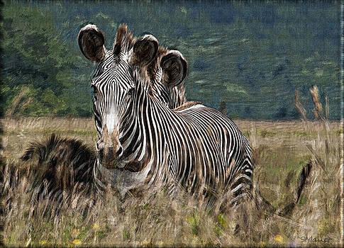 Zebras by Sandy Mallet