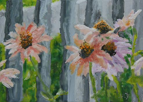 11 August 2012- Echinacea by Heather Douglas