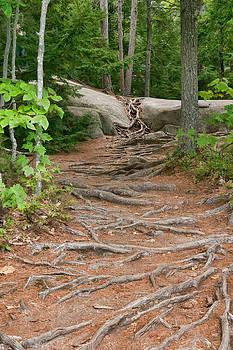 12711 Root Pathway by John Prichard