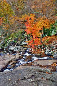 Mark Dodd - Cunningham Falls