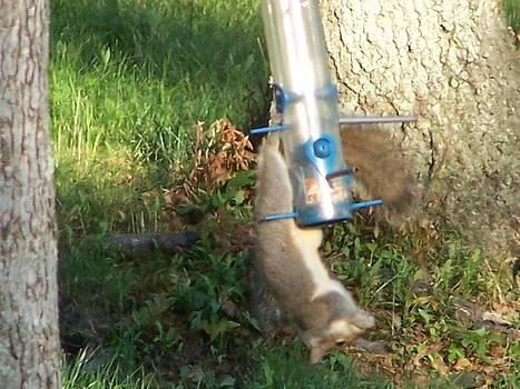 Acrobatic Squirrel by Lila Mattison