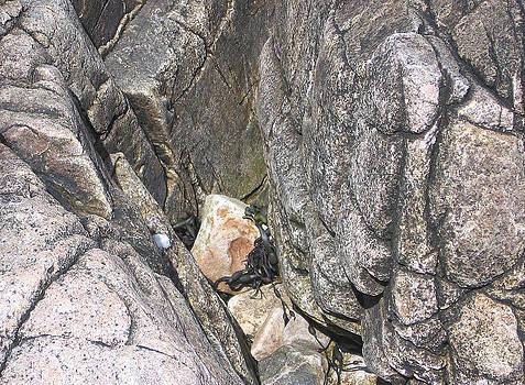 Bar Harbor Rocks by J R Baldini M Photog Cr
